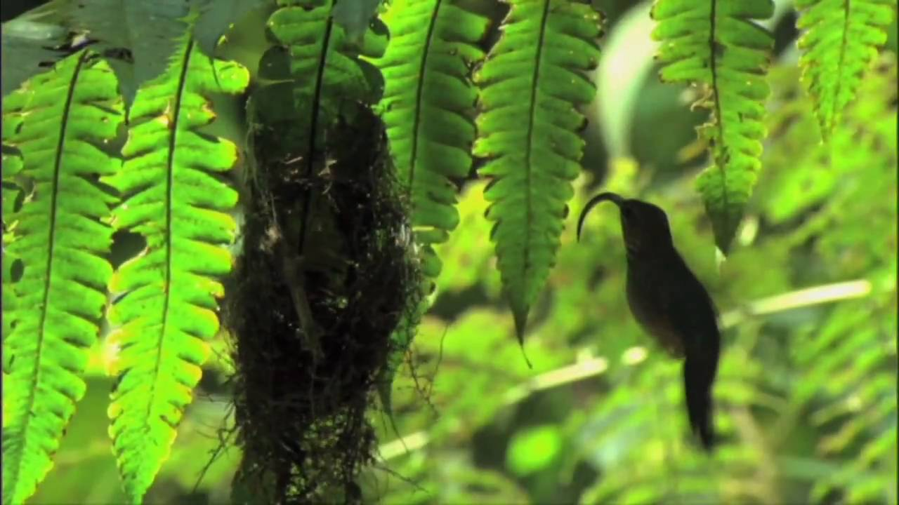 "NATURE | Behind the Scenes of ""Hummingbirds"" 