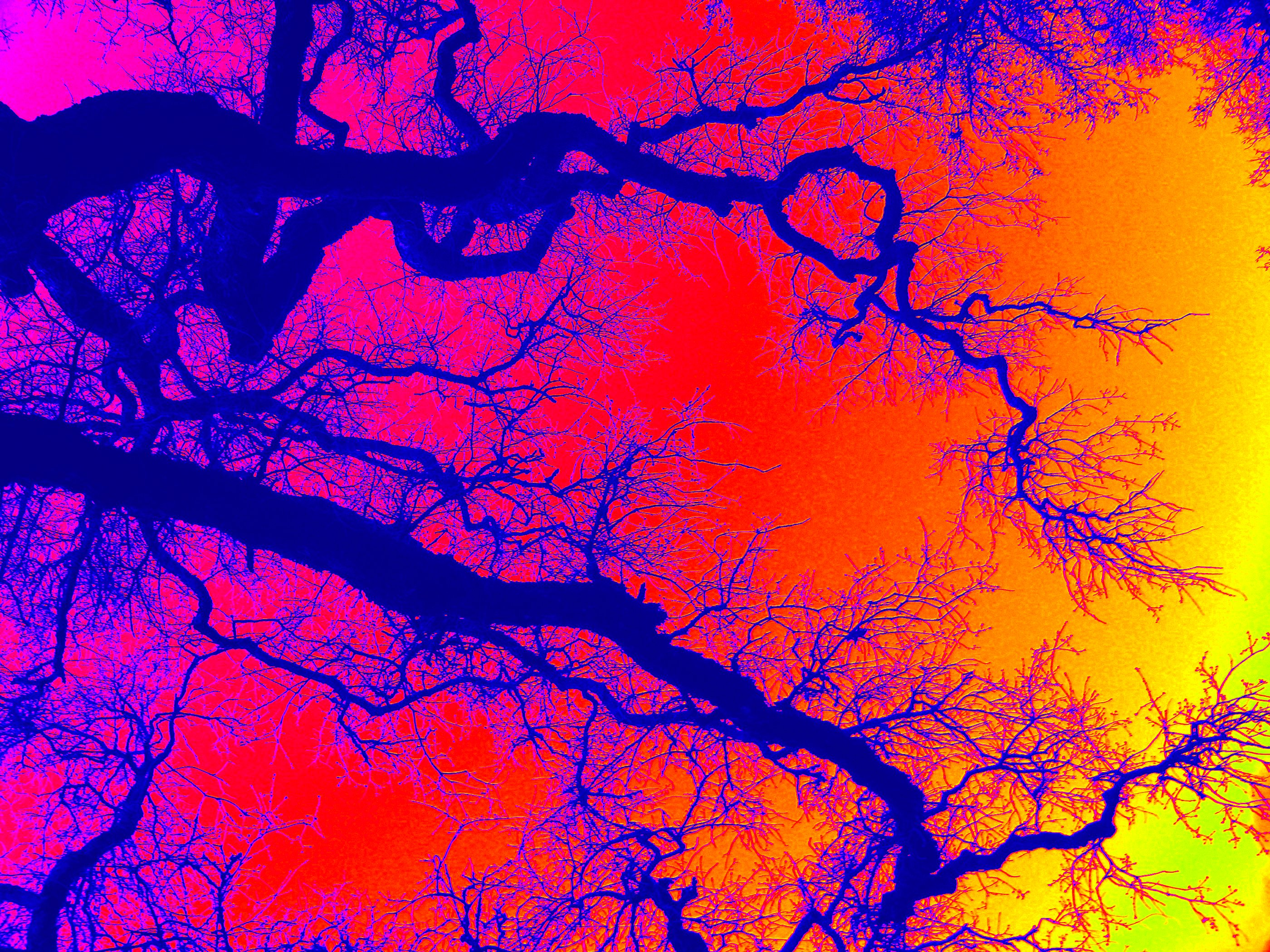 Santa Cruz Psychedelic Oak Tree
