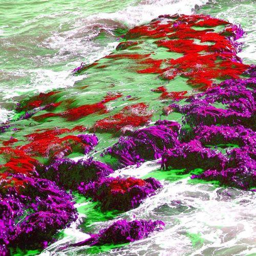 John Street Beach Psychedelic Lichen